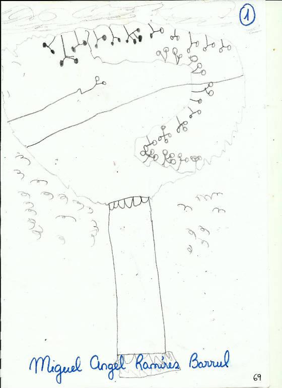 PLANTAS, LAS. Árboles, matas, los. Página 4